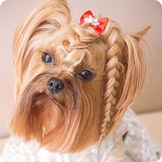 Te Psy Mają Lepsze Fryzury Niż Niejeden Człowiek Hahaha