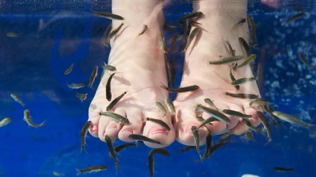 Fish pedicure-  Garra Rufa to gatunek maleńkich rybek, które delikatnie skubią nasze stopy,pozbywając je jednocześnie martwego naskórka. Zabieg ten zyskał ogromną popularność  na całym świecie.