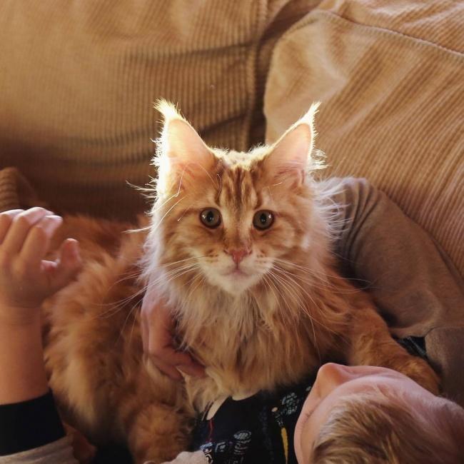 Kot Michała Żebrowskiego